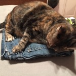 cat on clothes
