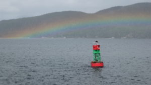 sea lions, eagle, buoy, and rainbow