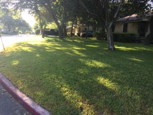 Front yard July 28